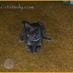 Foto z roku 2004. Zřetelný orb, který jak se zdá, sleduje kočka.